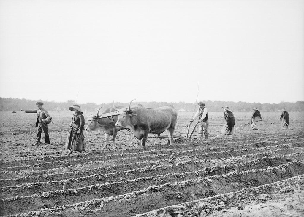 Labour dans les Landes par Félix Arnaudin